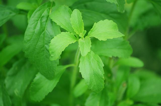 rostlina stevie.jpg