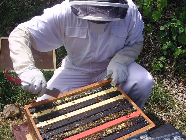 včelař u včel